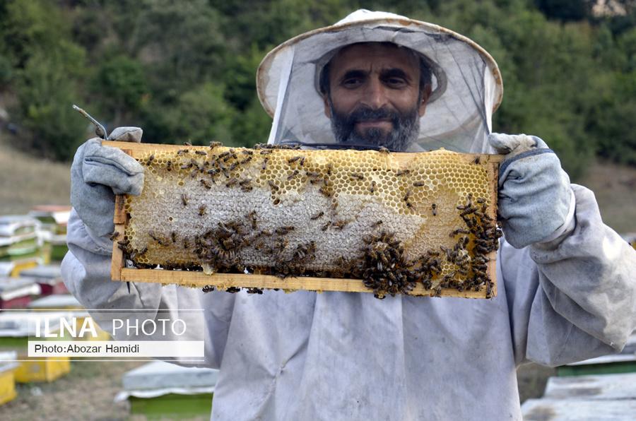 زنبورداری در کمنی دیلمان